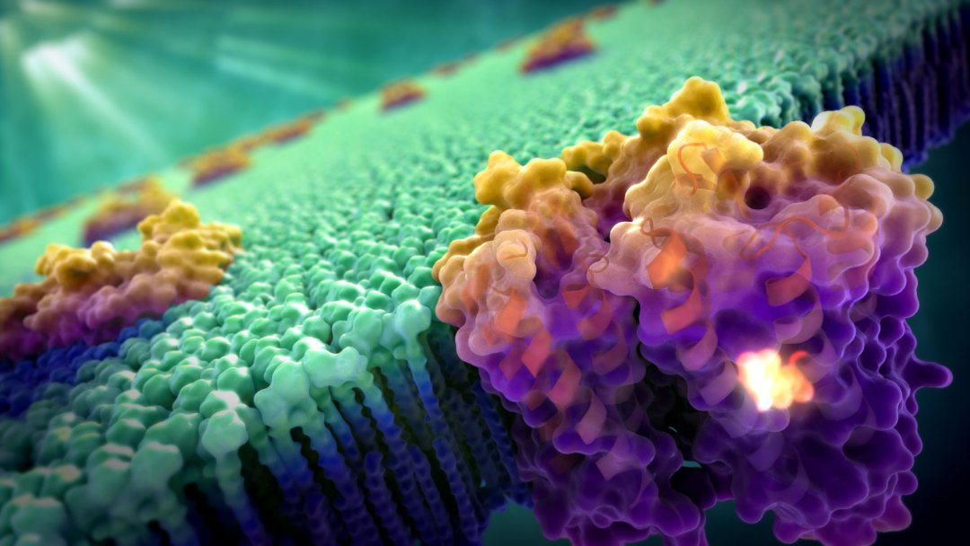 Art of the Cell - Bacteriorhodopsin