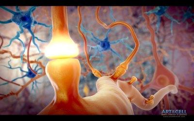 Neuron Signal in Brain- 024