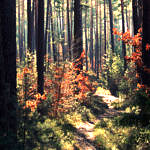 Figure 23 Forest