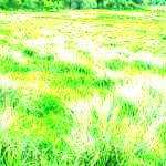 Figure 27 Grasslands