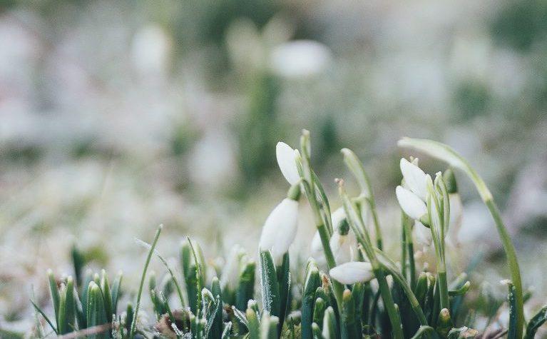 nettoyage de jardin printemps