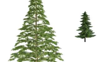fir tree psd