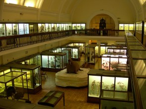 Horniman Natural History Gallery. Image courtesy Horniman Museum and Gardens