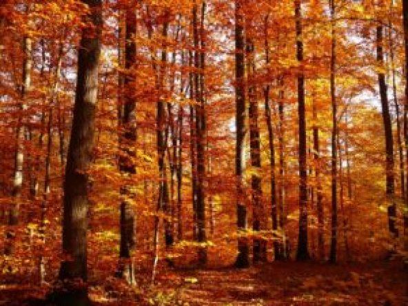 autumn-267322_640