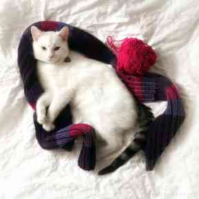 Kitty Zen Wolke Mao on the bed with yarn and a scarf