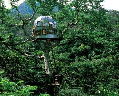 treehouseintrees.jpg