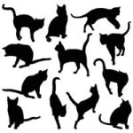 Getting Liberals to Agree Really Is Like Herding Cats: Psychologists