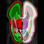 The Most Detailed Map Of The Human Brain Was Revealed This Week