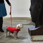 A Contemporary Art Show For Dogs, And It's Called –
