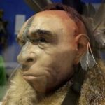 Research: Neanderthals Made Art Too