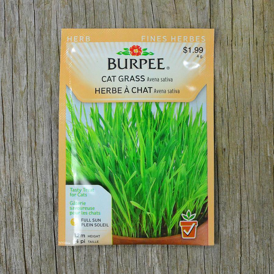 Cat Grass Seeds Burpee Arts Nursery Ltd
