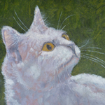 Cat in moonlight 30x40 price 200 Euro