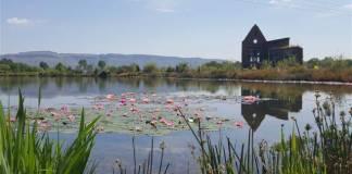 Mulligatawny Farm - Lakeside Folly