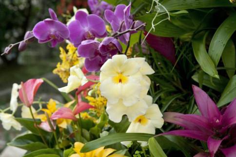 Kew Tropical Extravaganza preparation