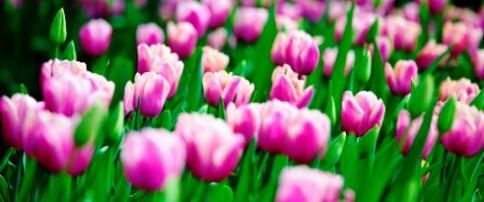 spring-blooms-2016