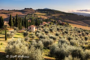 """""""Tuscan Glow"""""""