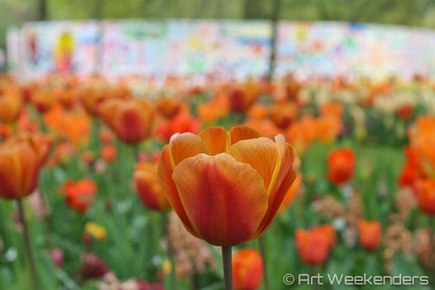 The-Netherlands-Keukenhof-Tulips