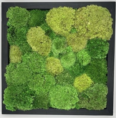Wall Garden - Cushion Moss Wall Art Frame Decoration