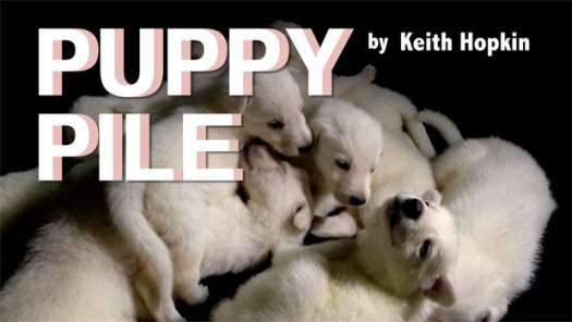 Puppy Pile by Keith Hopkin -  Videos of White German Shepherd Puppies at puppy-pile.com