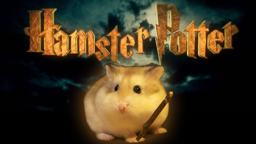 Hamster Potter by Keith Hopkin