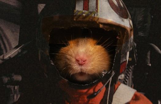 Hamster Skywalker from Hamster Wars by Keith Hopkin
