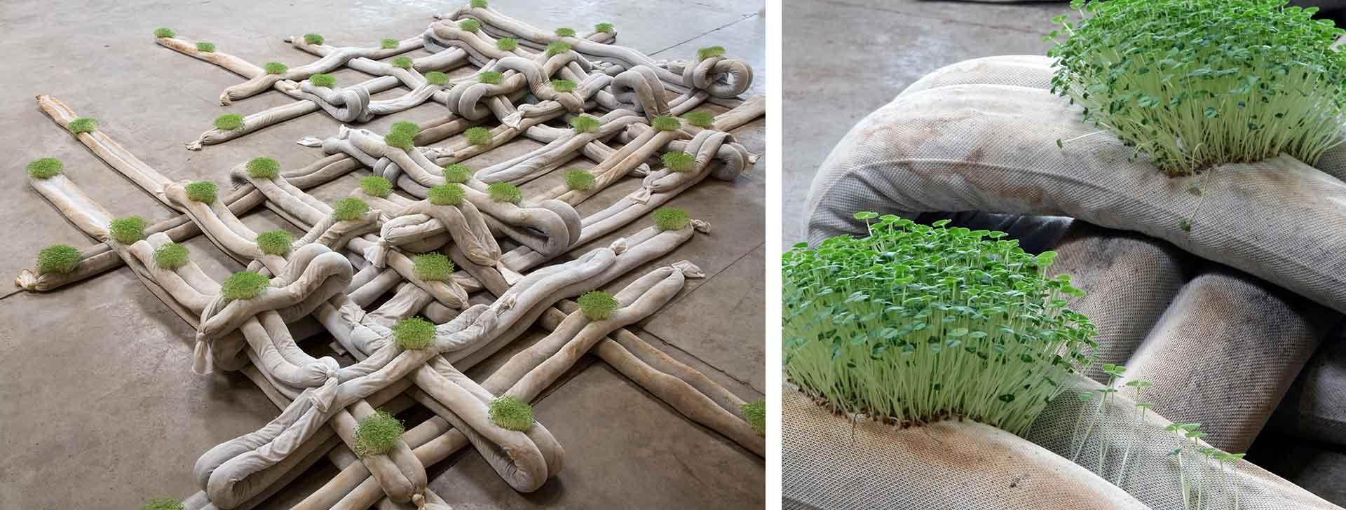 lattice-shaped plant sculpture