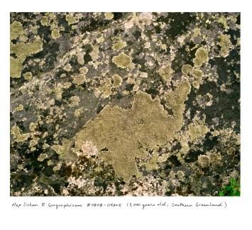 Greenland Lichens