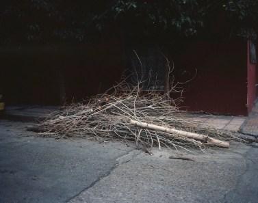 Urban pruning - Athens I hear you ©Georges Salameh