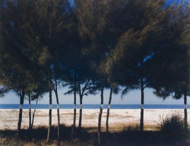Altered Landscapes