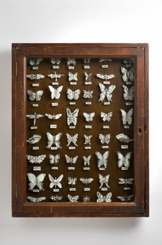 Butterfly Cabinet - Katharine Morling