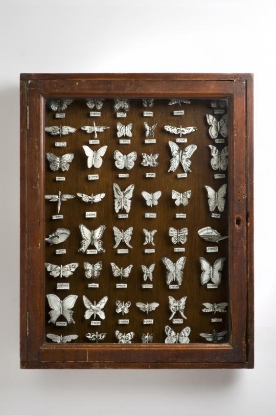 Butterfly Cabinet - Katharine Morling