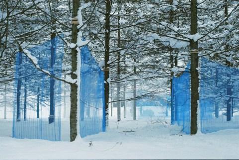 Habitat grove - Hidemi Nishida