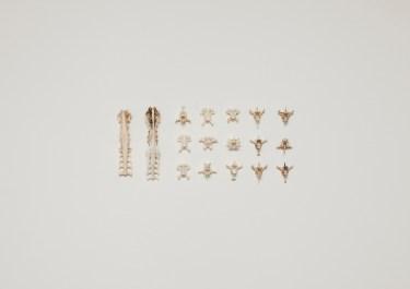 from DUNES, Bird+Bones, vertebrae © Lux Eterna