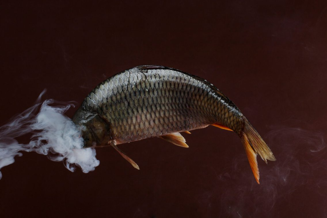 Smoking Fishes - Enrico Policardo