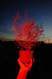 Stranger Things –Max Slobodda