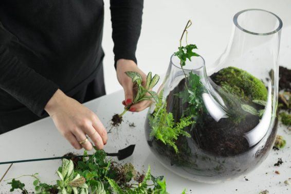 7. Continue placing the smaller plants using this method, trying to keep them away from the edges.