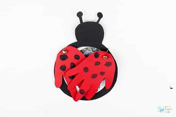 Close Bug Antennae