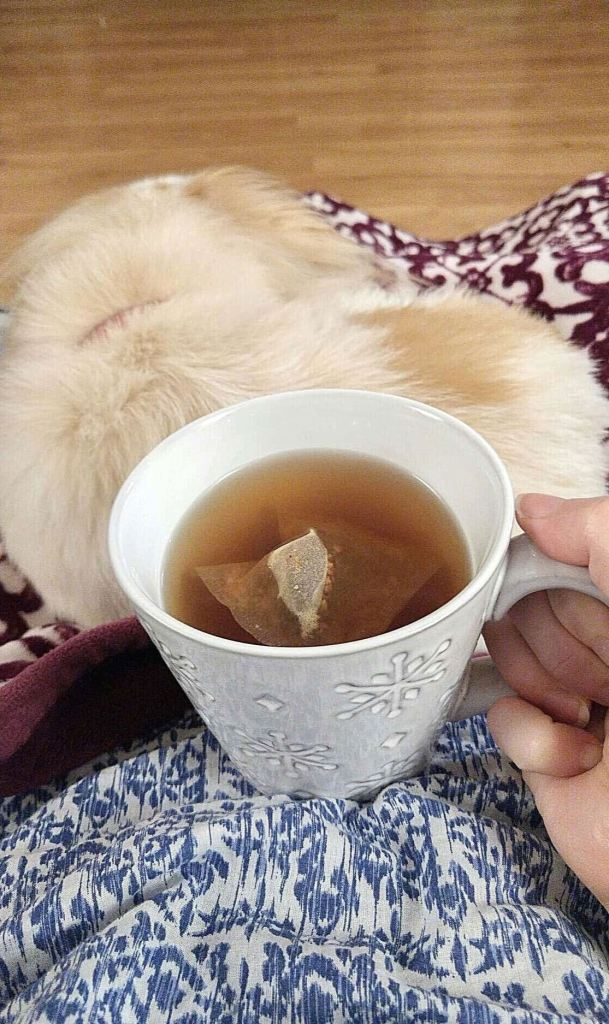 Picture of lap covered in purple throw with a sleeping dog and white mug with hot tea