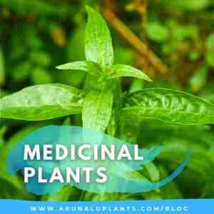 Medicinal Plants Blog