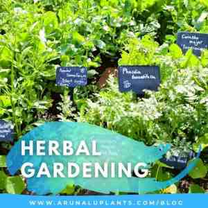 herbal gardening blog