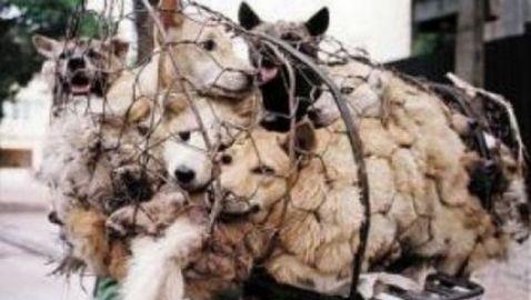 Σκοτώνουν ζώα και τα τρώνε