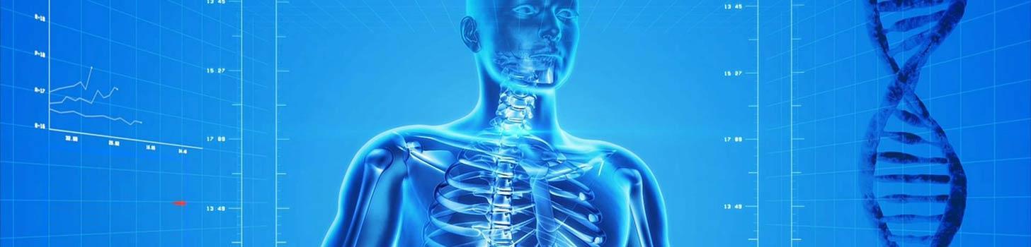 image of human body