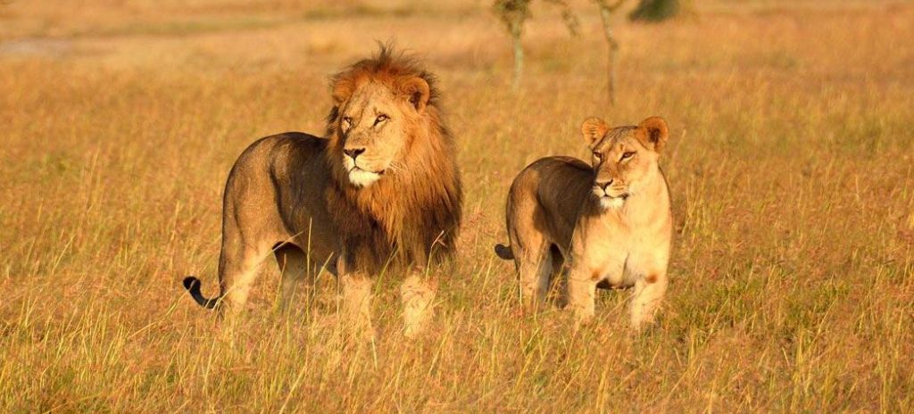 gir-national-park-best-place-to-visit-in-gujarat