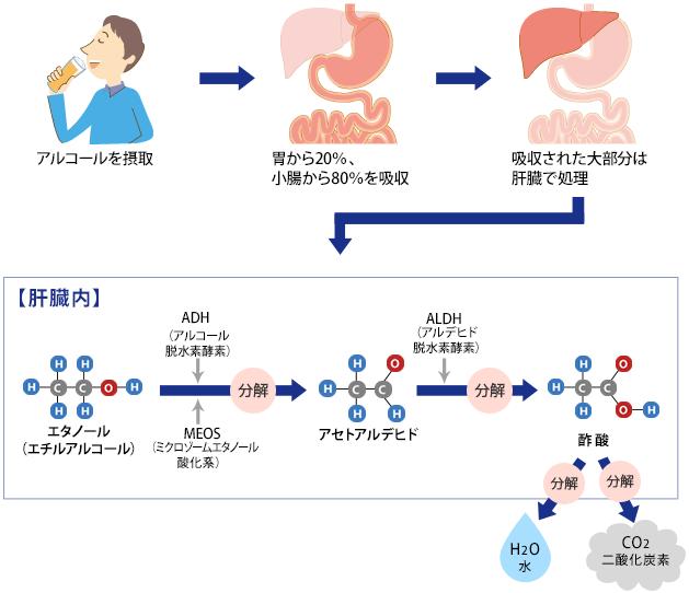 体内でのアルコールの変化の図