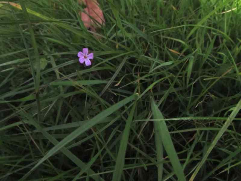 Tiny pink flower
