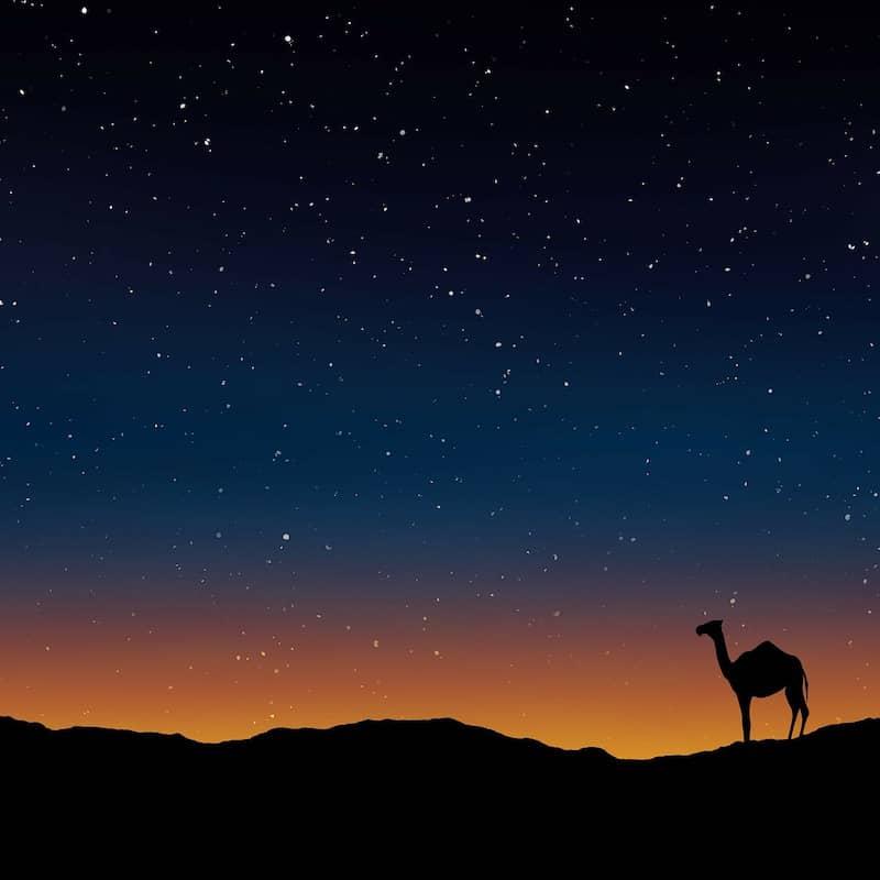 gratitude for a camel