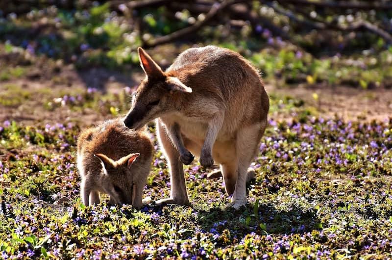 Kangaroos for the Versatile Blogger Award