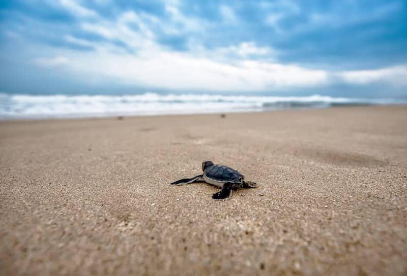 Trade publishing turtle