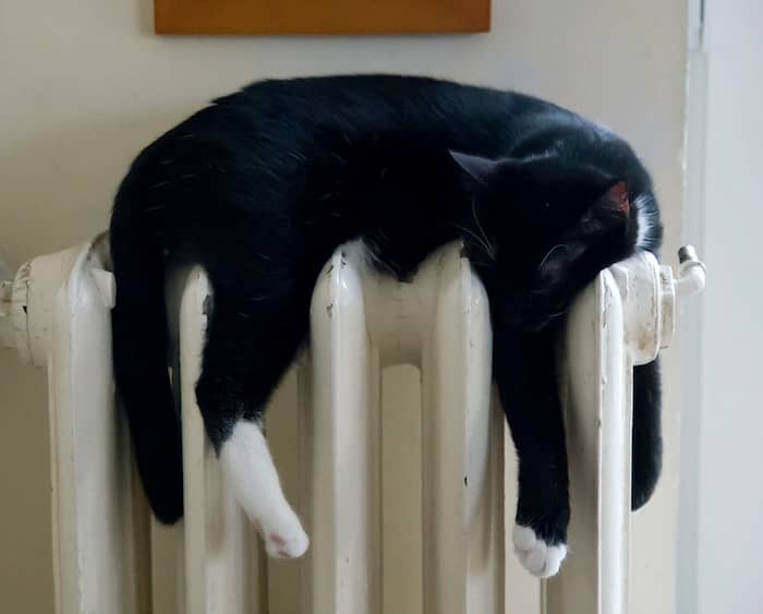 The Great Cat on a heater