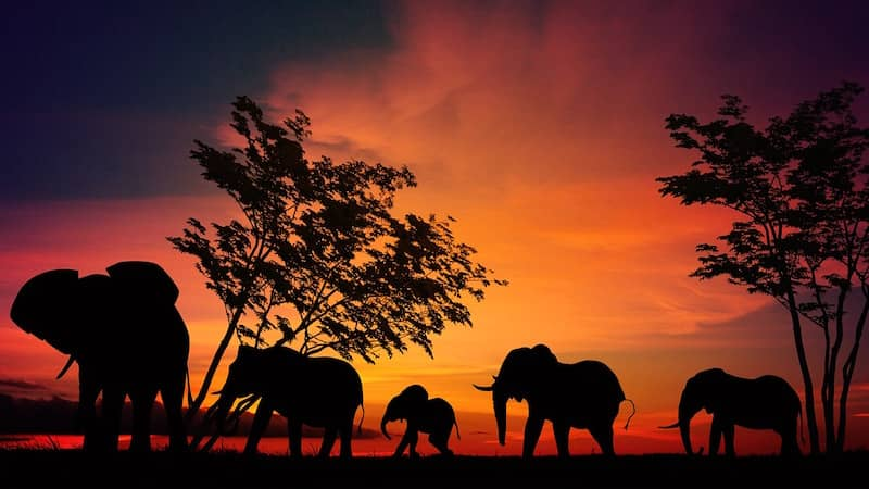 The Grief of Elephants